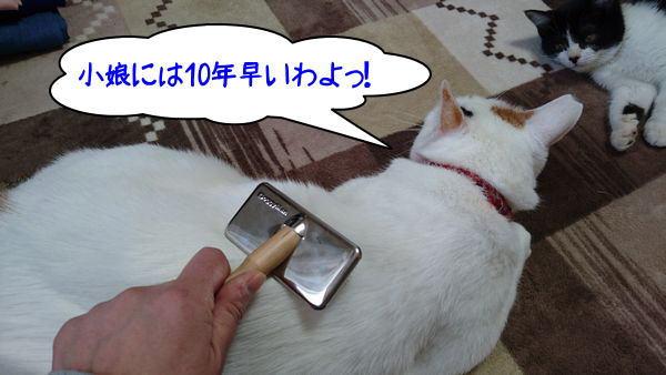 子猫が初めてのブラッシングをされるまでの画像