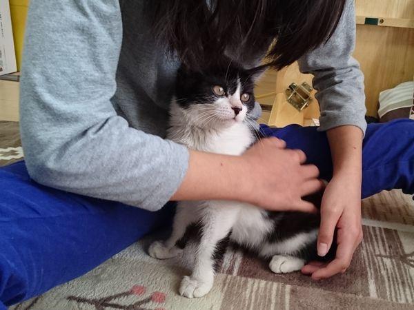 子猫の食欲どこまでも【ノーカット動画】