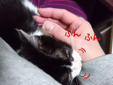 東海地方(愛知三重岐阜)犬猫保護ボラグループアニサポ里親募集保護猫成美ちゃん