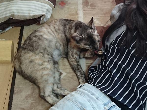 猫と添い寝♪猫の寝場所で○○が分かる!?