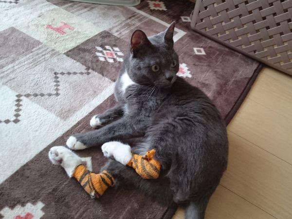 東海地方(愛知三重岐阜)犬猫保護ボラグループアニサポ里親募集保護猫負傷猫