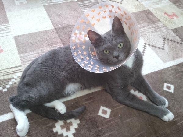 猫の足裏の怪我、いやーな場所が残ったね