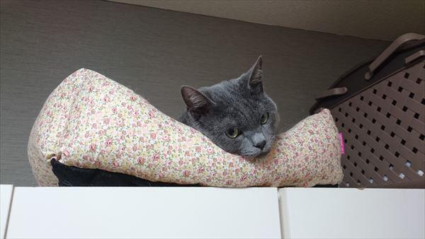 猫が思うほど人間は暇じゃないのだよ