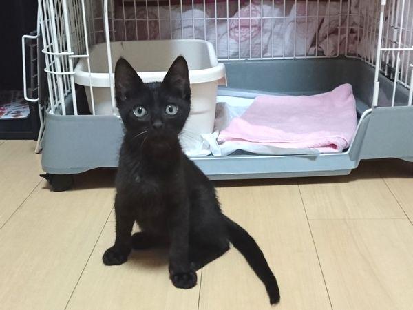 黒猫のノニ君、マイペースな子猫なのかも?【滞在5日目】