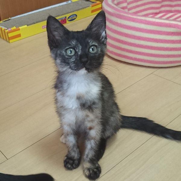 兄弟に一目置かれるサラシアちゃん、サビ猫はやっぱり賢いのだ