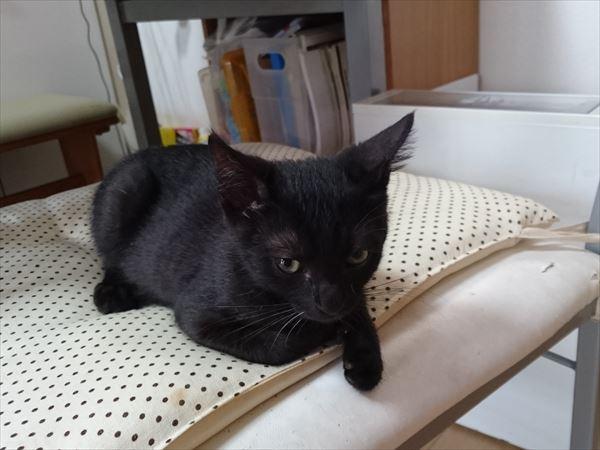 子猫3兄妹黒猫ノニ