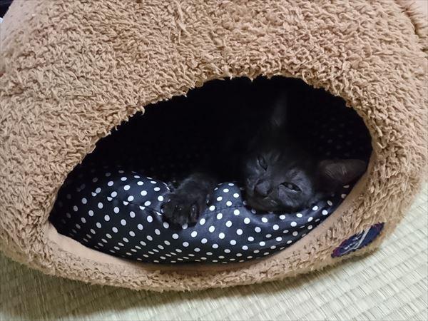 東海地方(愛知三重岐阜)犬猫保護ボラグループアニサポ里親募集保護猫健康茶隊ルイボス