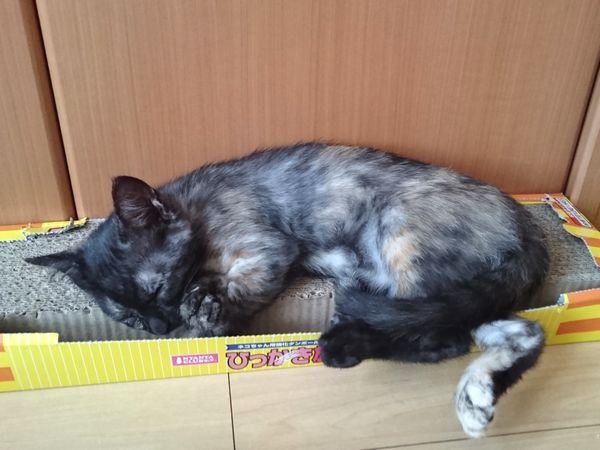 アニサポ保護子猫