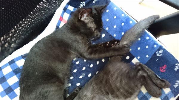 しっぽをつかんで眠る黒猫
