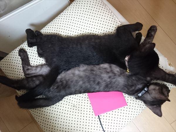くっついて眠る子猫の兄弟