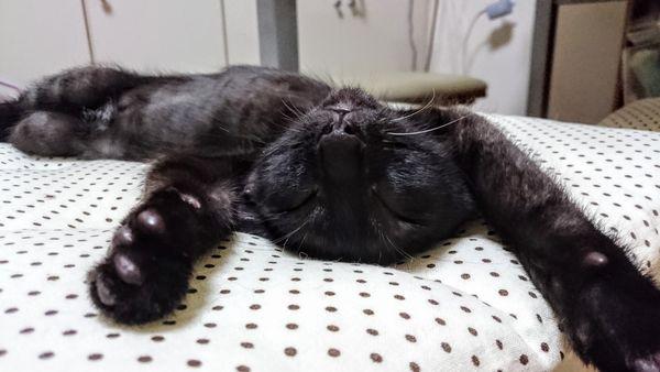 東海地方(愛知三重岐阜)犬猫保護ボラグループアニサポ里親募集保護猫健康茶隊