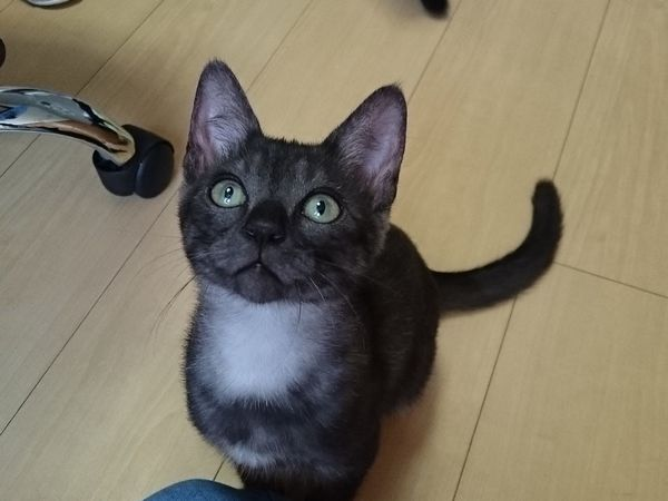 お目目くりくりの子猫