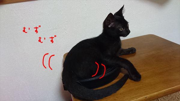 黒猫オス子猫