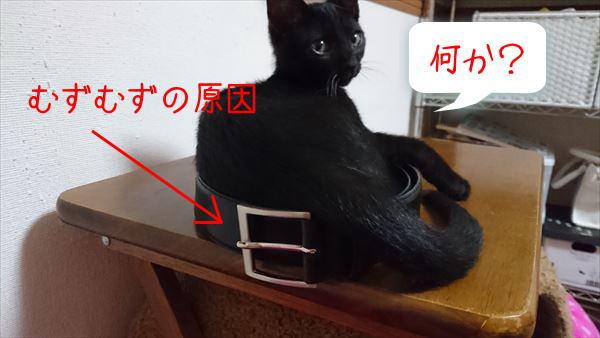 里親募集中の黒猫子猫