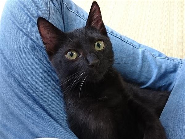 アニサポ保護の黒猫