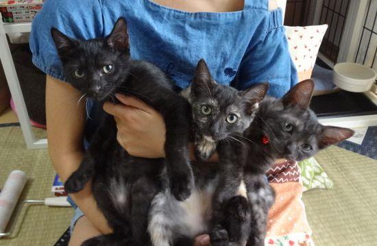初!猫の譲渡会参加の3子猫、お疲れモードでスヤスヤ