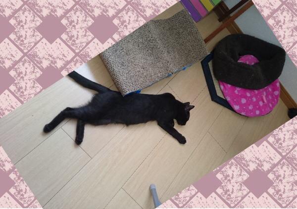黒猫ノニ君