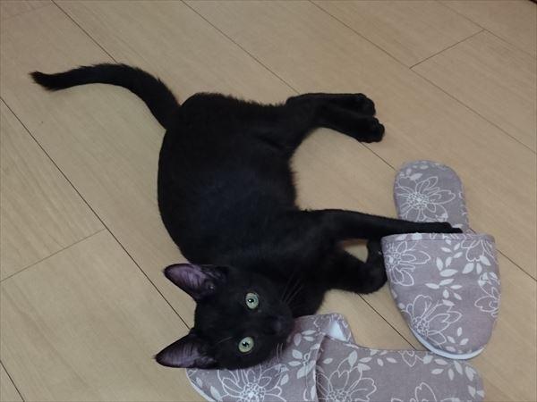 遊び足りない子猫ノニ、大好きなトム猫はお疲れ気味(^^;)