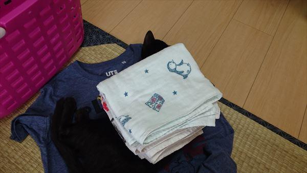 子猫の背中にタオルを乗せてみる