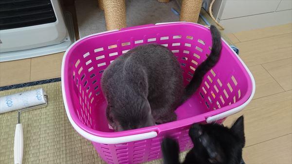 大人猫と子猫の攻防戦1