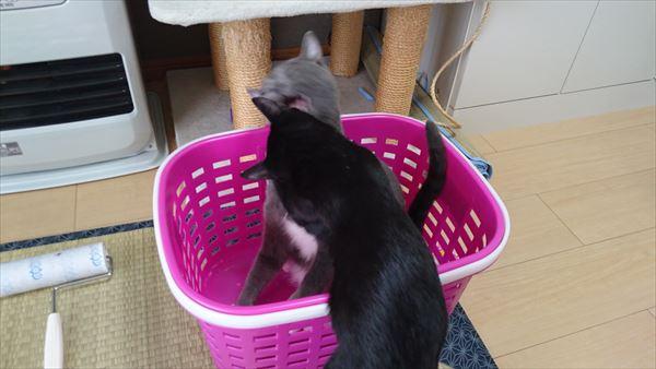 大人猫と子猫の攻防戦2