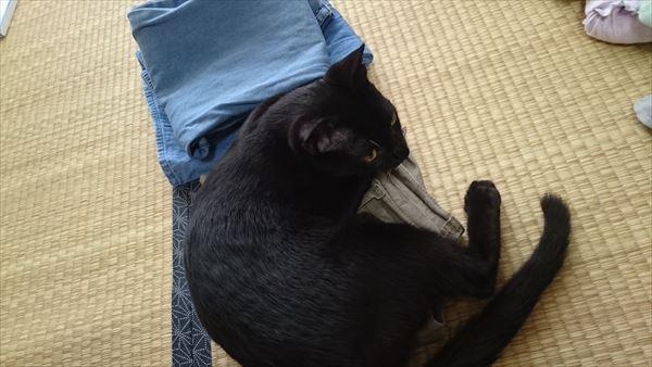 たたんだ洗濯物に乗る子猫