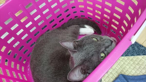 意地悪い顔のトム猫