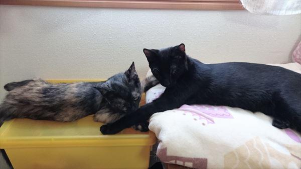 アニサポ保護猫健康茶隊