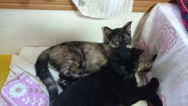 アニサポ保護猫健康茶隊子猫