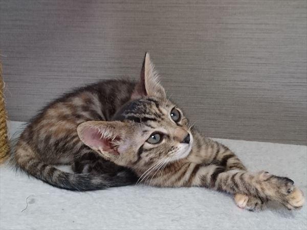 保護猫の子猫兄妹