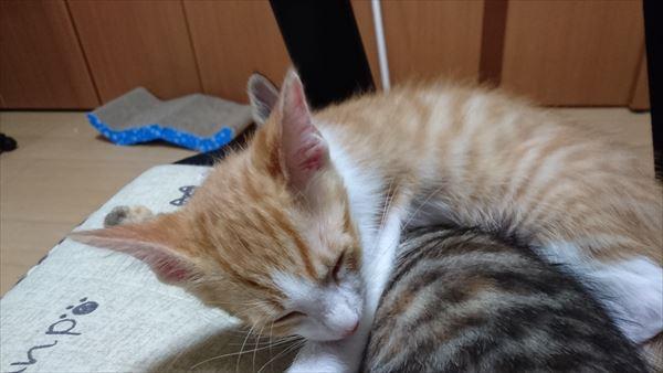 ひまわり隊アニサポ保護猫