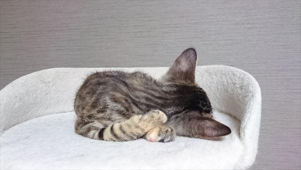子猫の寝姿