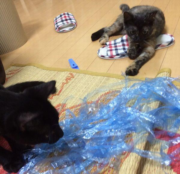 里子に行った猫たち