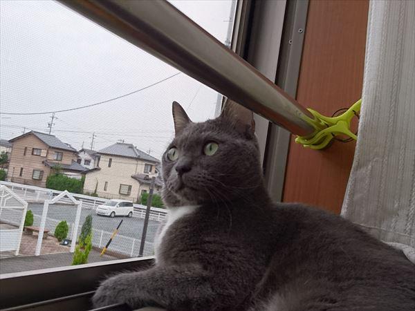 噛み噛みオレ様猫トム氏の現在(やっぱりおれ様なのだ)