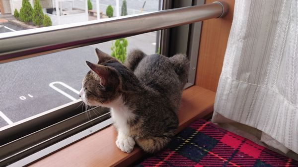 アニサポ子猫はあと
