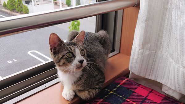 人への手加減、猫社会のルールを勉強中の子猫