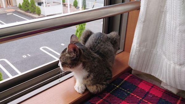 アニサポ保護猫