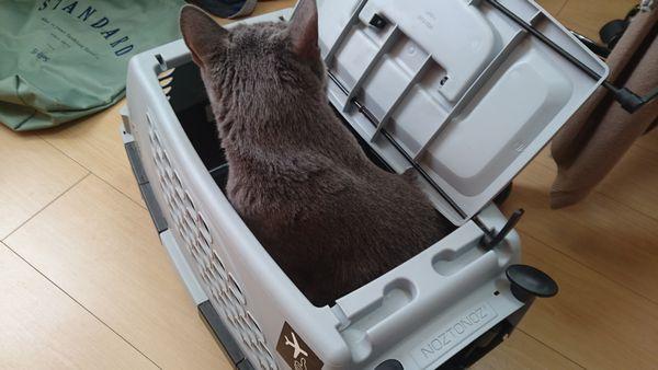 初めての譲渡会!猫を被ったはあとちゃん、はぬくぬく~♪