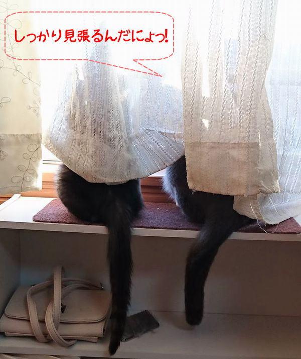 好奇心が拡げる子猫の世界/光トライアルに♪