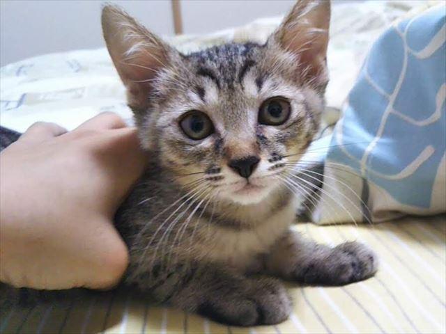 4匹の子猫たちワクチン接種★パルボウィルスについて