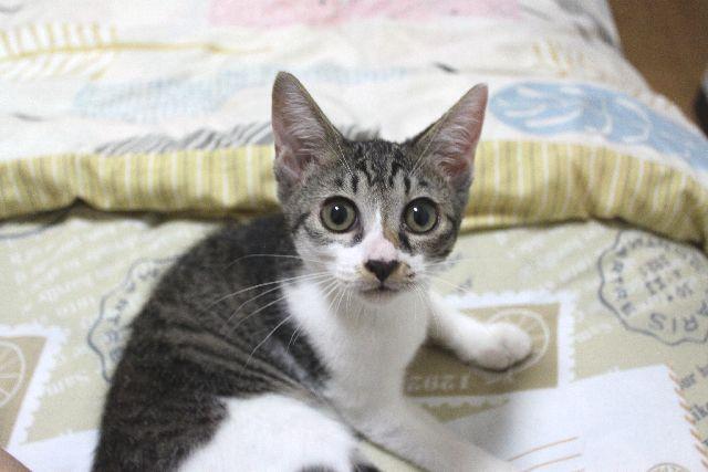 子猫の成長は早い!生後3ヶ月を過ぎたいさき姫、毛色が変わってきた?