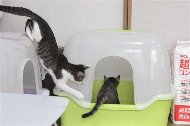 トイレが気になる猫の心情はいかに!?繰り上がり制なの?