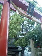 kichibe1.jpg