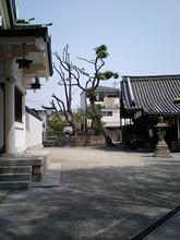 nozatosumiyoshi2.jpg