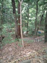 hoshidamyouken14.jpg