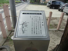hachihonsugi05.jpg