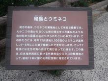 Hinomisakijinjya29.jpg