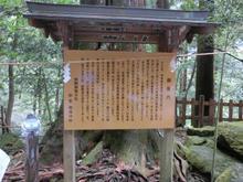 Kumanonachi_taisya010.jpg