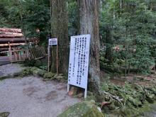 Kumanonachi_taisya011.jpg