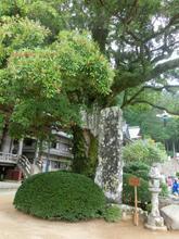 Kumanonachi_taisya041.jpg